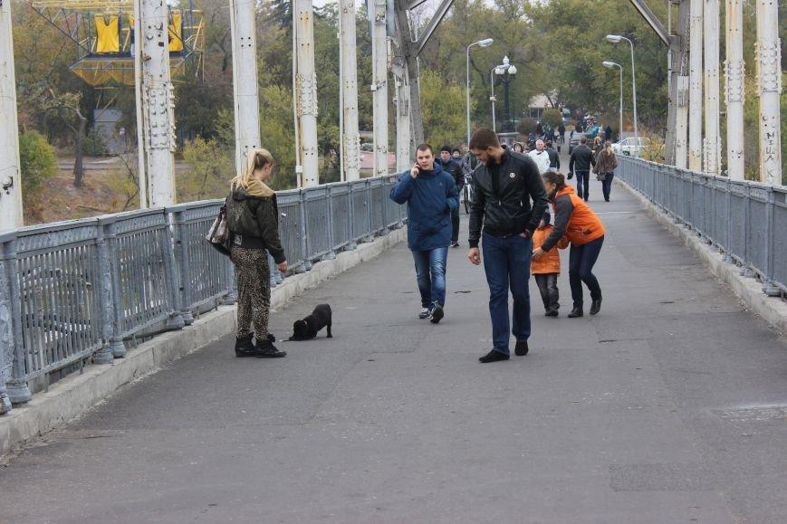 Четырехлапый Днепр: как живется животным на улицах города (ФОТО) (фото) - фото 4