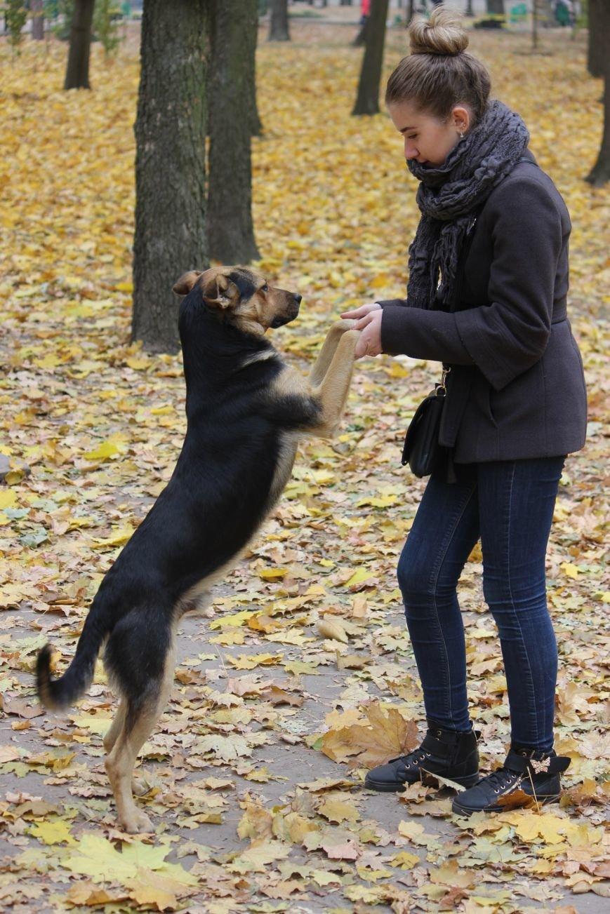 Четырехлапый Днепр: как живется животным на улицах города (ФОТО) (фото) - фото 3