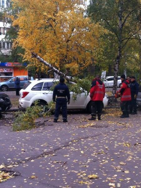 В Киеве рухнувшая берёза разбила автомобиль (ФОТОФАКТ), фото-1