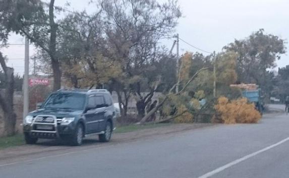 В Севастополе водитель на «Мерседесе» снес дерево, объезжая пешехода (ФОТО, ВИДЕО) (фото) - фото 1
