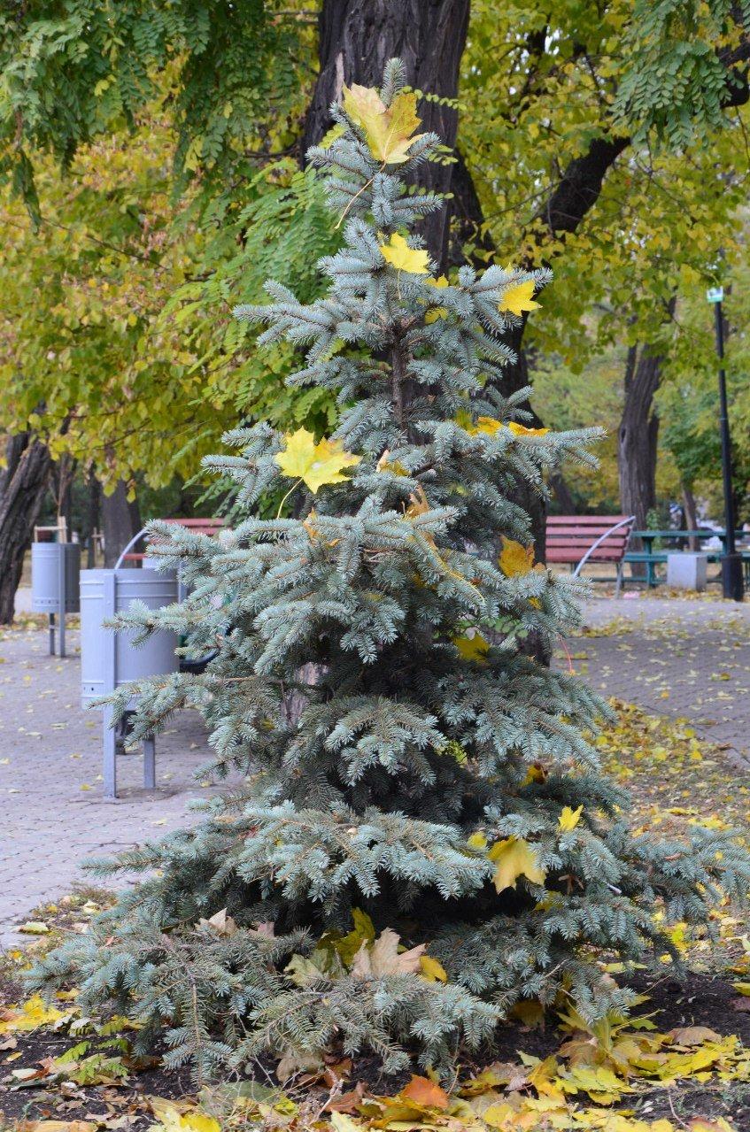 Фотопятница: осень и мода (фото) - фото 13