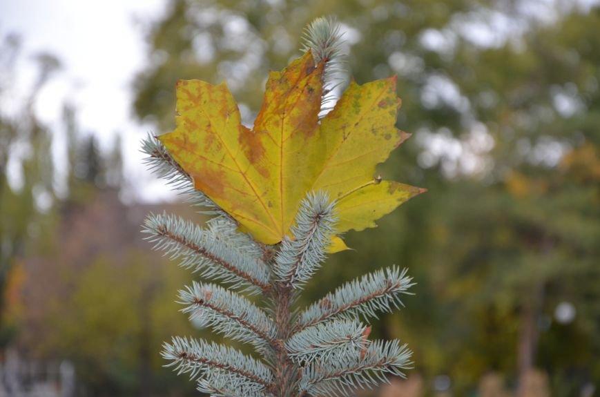 Фотопятница: осень и мода, фото-32