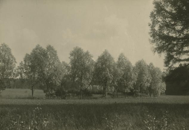 1. Ивовая аллея начало ХХ века