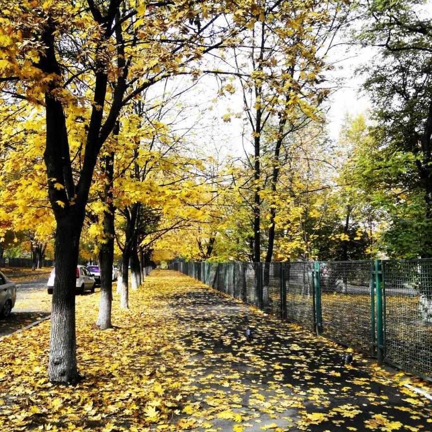 Осень в Запорожье, – подборка фото (фото) - фото 1