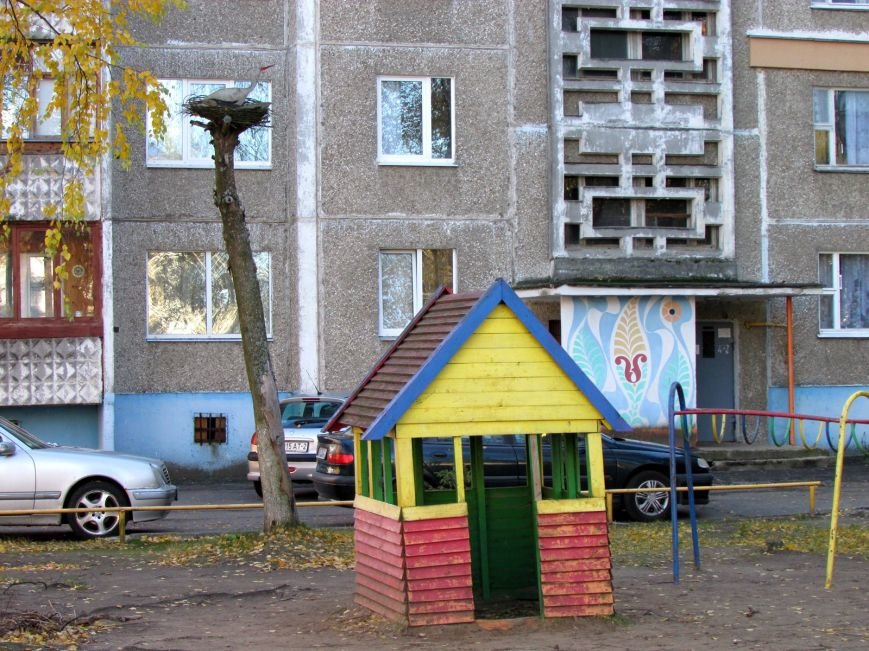 Дракон, обезьяны и медведь: фотопрогулка по дворам и паркам Новополоцка, фото-1