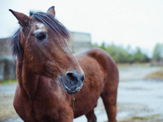 Украденный у украинских пенсионеров конь стал предметом судебных разбирательств в Гомеле (фото) - фото 1