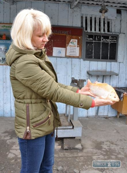 В Одесской области рыбаки поймали живую золотую рыбку (ФОТО) (фото) - фото 1