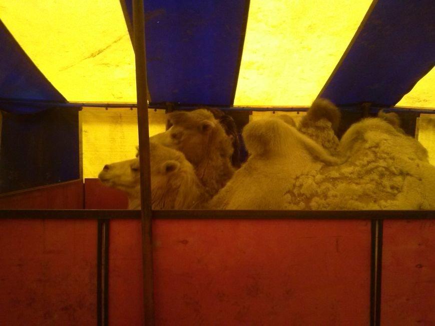 В Ульяновске ветеринары проверили верблюдов, дикобразов и питонов (фото) - фото 2