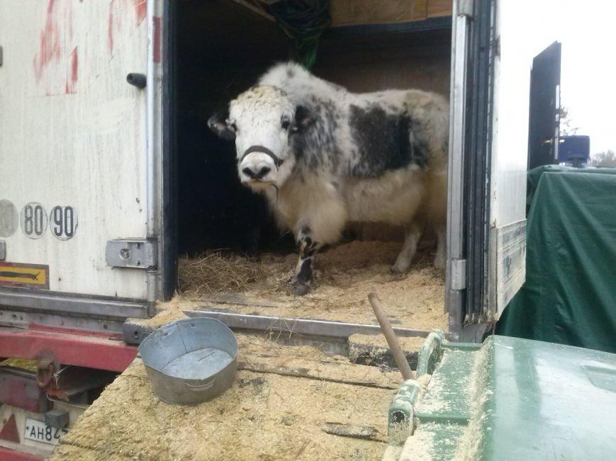 В Ульяновске ветеринары проверили верблюдов, дикобразов и питонов (фото) - фото 1