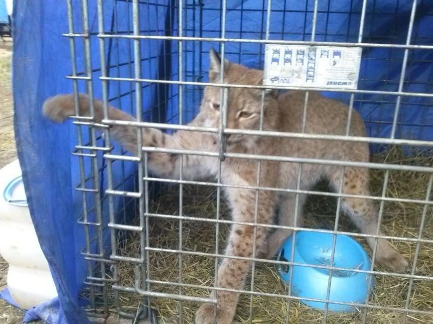 В Ульяновске ветеринары проверили верблюдов, дикобразов и питонов (фото) - фото 3
