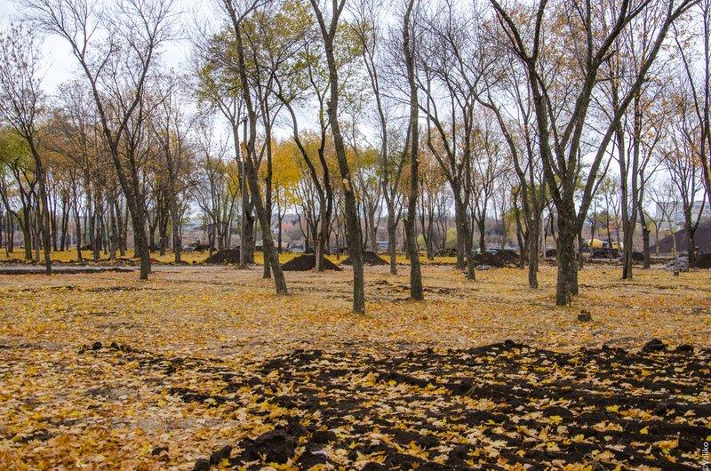 В Синельниково строят первый парк для отдыха (фото) - фото 5