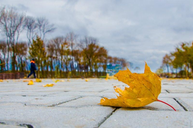 В Синельниково строят первый парк для отдыха (фото) - фото 3