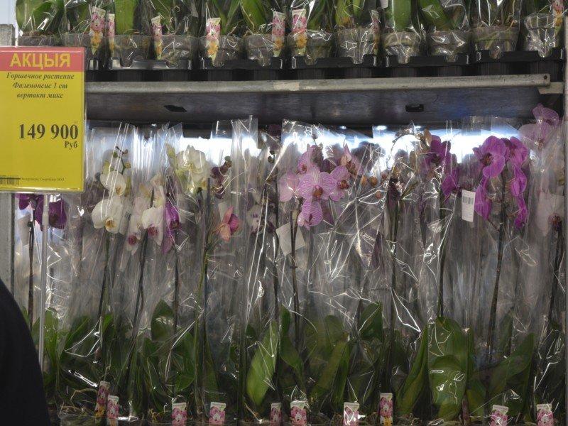 Фоторепортаж: Открытие магазина «MART INN» в Новополоцке, фото-14