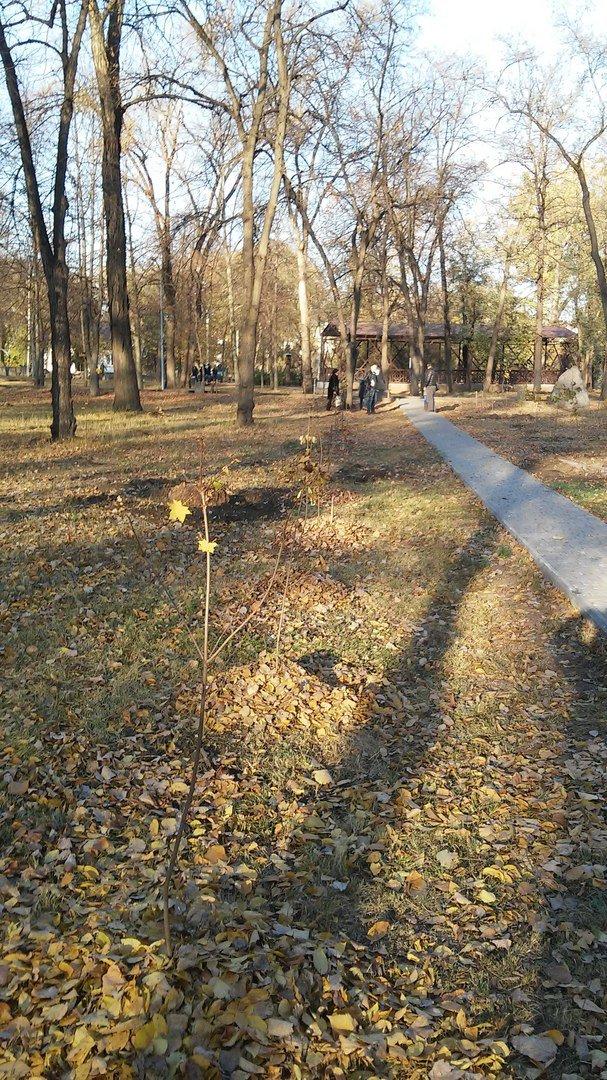 Криворожане высадили на Аллее Героев еще 17 кленов (ФОТО) (фото) - фото 1