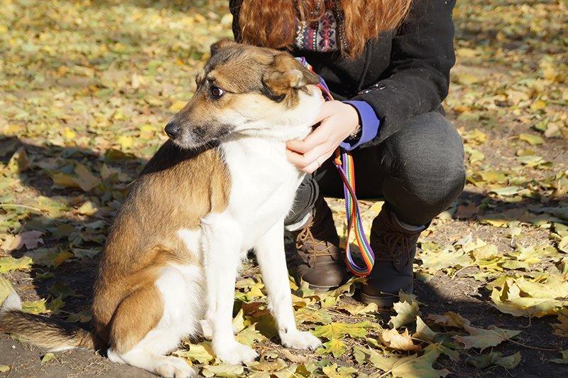 В Белгороде выставке-раздаче 32 бездомные собаки нашли новый дом (фото) - фото 1