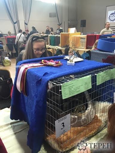 Тернополяни мали змогу відвідати Міжнародну виставку котів (фото) (фото) - фото 1