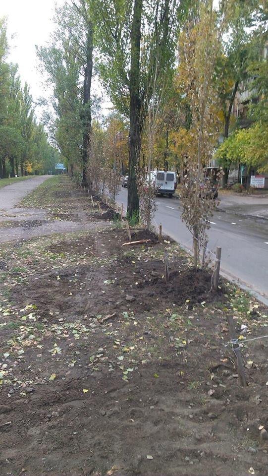 В Киеве высадили сотню тополей без пуха (ФОТО) (фото) - фото 1