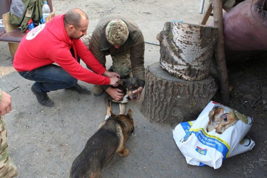 Вблизи Мариуполя австрийцы накормили бездомных животных на блокпостах (ФОТО) (фото) - фото 1