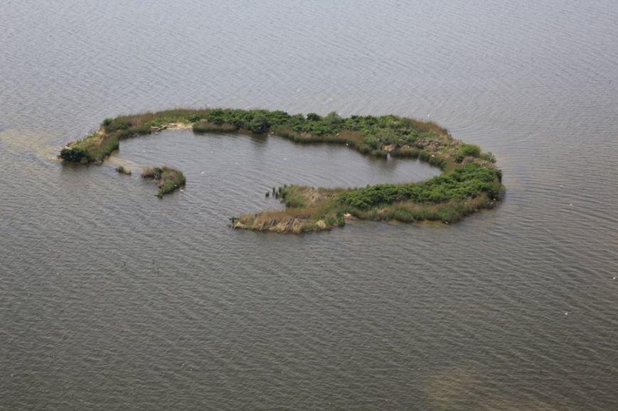 Запорожские плавни сняли с высоты птичьего полета, – ФОТО (фото) - фото 1