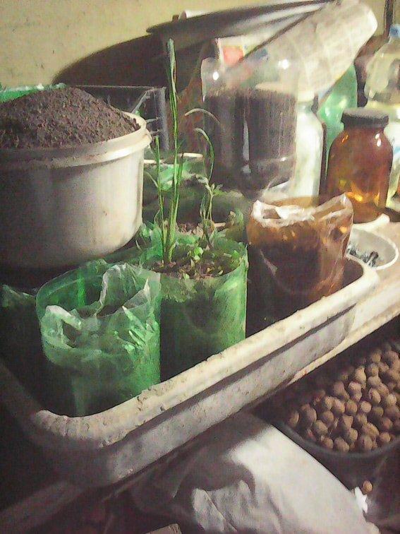«Пора растить»: житель Харьковщины устроил у себя дома нарколабораторию (ФОТО) (фото) - фото 1