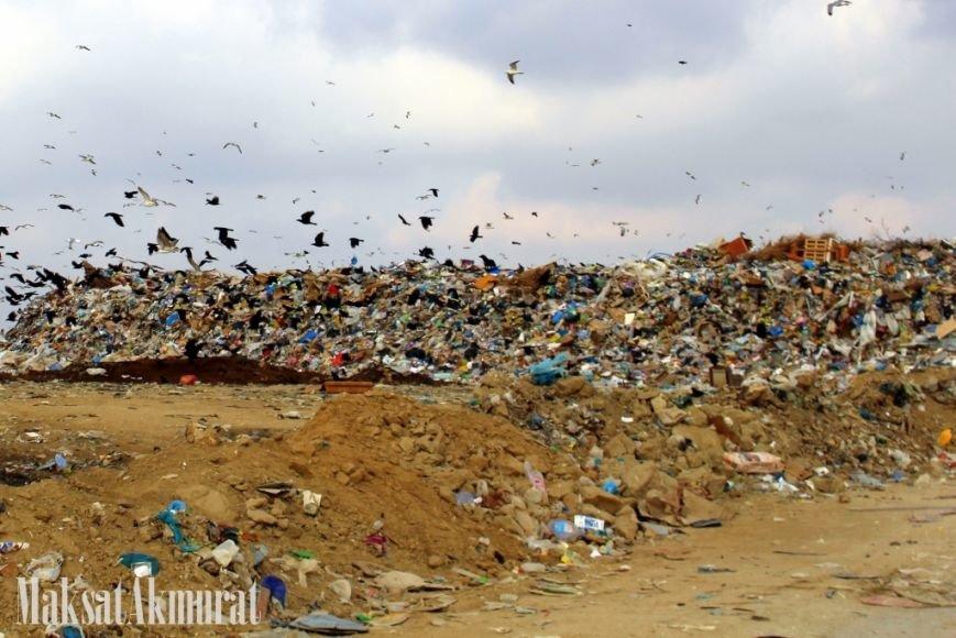 «Эй, а куда делись чайки в Актау?» (фото) (фото) - фото 4