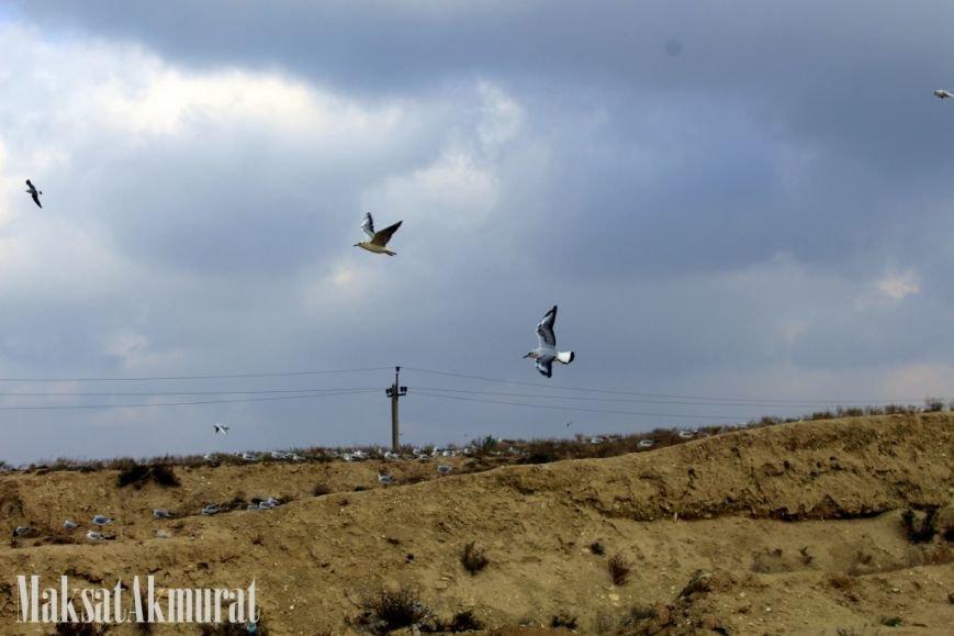 «Эй, а куда делись чайки в Актау?» (фото) (фото) - фото 5