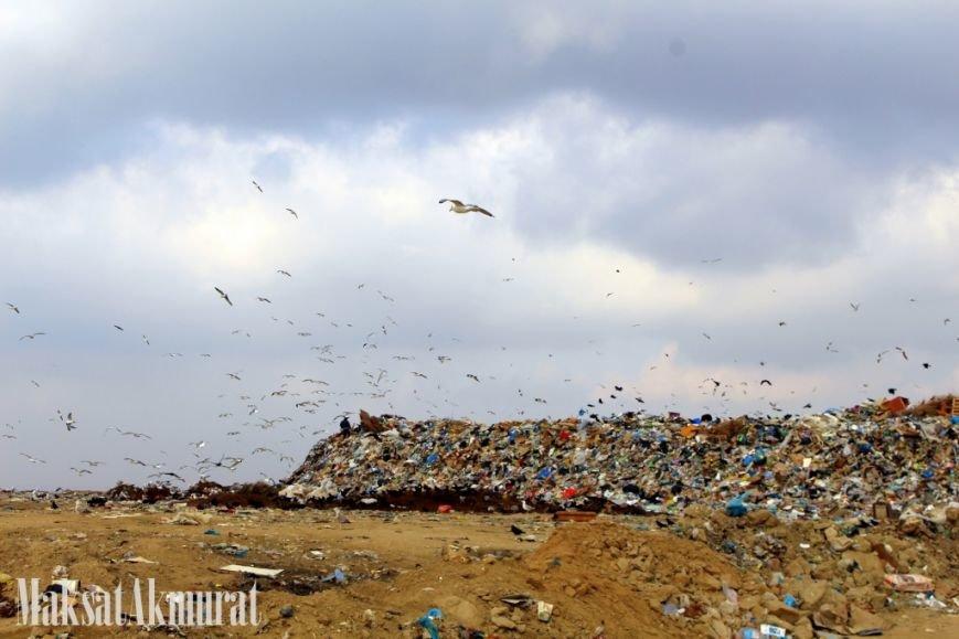 «Эй, а куда делись чайки в Актау?» (фото) (фото) - фото 2