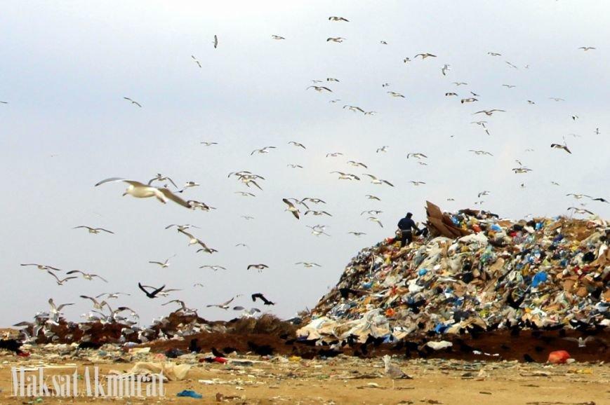 «Эй, а куда делись чайки в Актау?» (фото) (фото) - фото 3