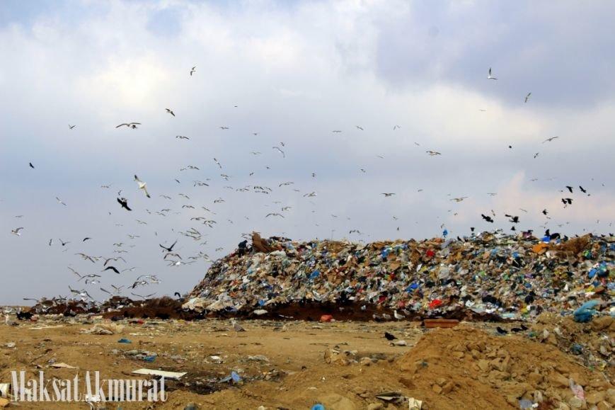 «Эй, а куда делись чайки в Актау?» (фото) (фото) - фото 1