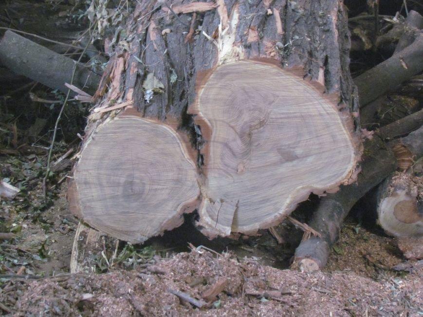 Предприятие Мариупольтеплосеть заготовило  дрова на всю зиму (ФОТО), фото-2