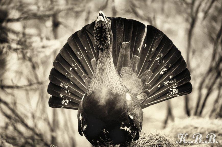 Сыктывкарский фотограф стал финалистом престижного конкурса (фото) - фото 1