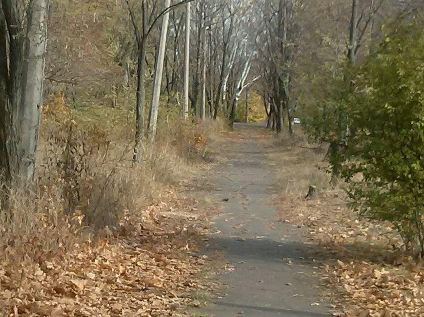 Из Приморского парка Мариуполя таинственно исчезли двадцать деревьев (ФОТОФАКТ) (фото) - фото 1