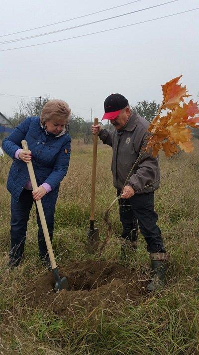 В нескольких районах города высадили вековые деревья (фото) - фото 1
