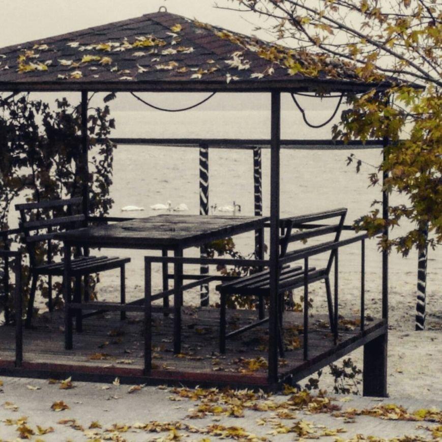 В Николаев прилетели зимовать лебеди (ФОТОФАКТ) (фото) - фото 1