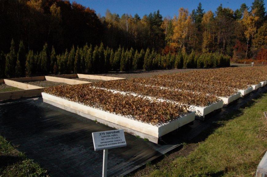 У Житомирському лісгоспі вже заготовили 5 тонн жолудя, фото-1
