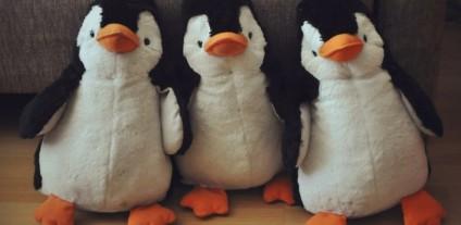 пингвин1