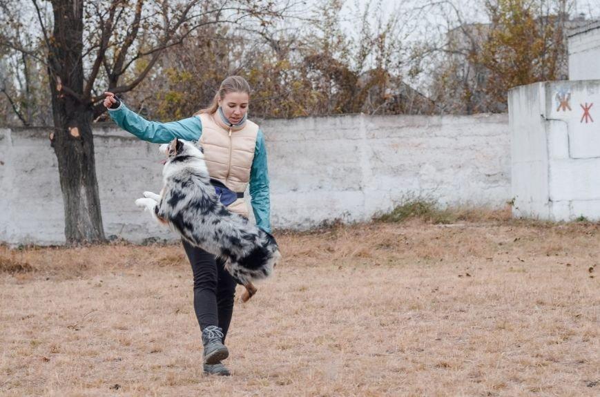 В Кривом Роге впервые  «фестивалили»  фокстерьеры, хаски, овчарки и другие (ФОТО) (фото) - фото 1