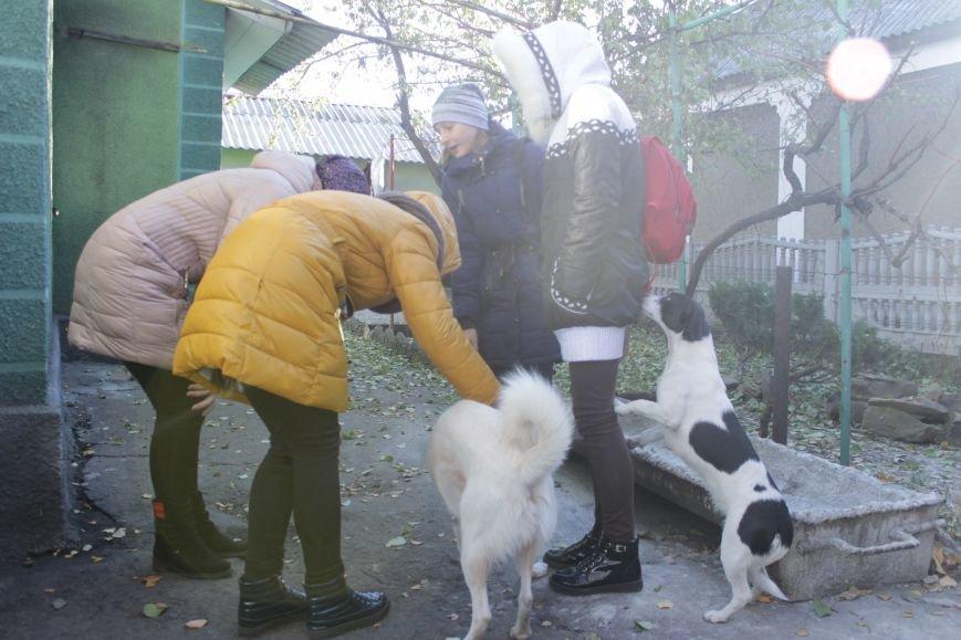 Белозерские школьники посетили мини-приют для животных (ФОТО), фото-2