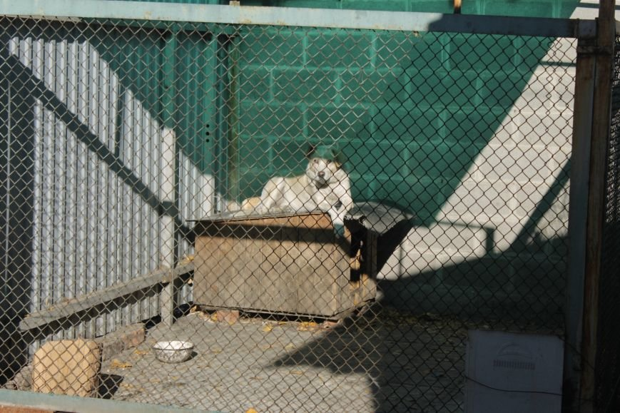 Белозерские школьники посетили мини-приют для животных (ФОТО), фото-8