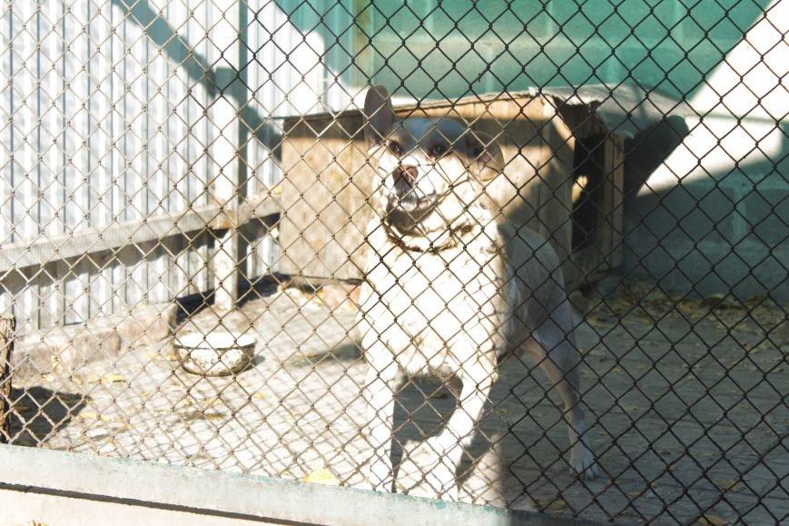 Белозерские школьники посетили мини-приют для животных (ФОТО), фото-7