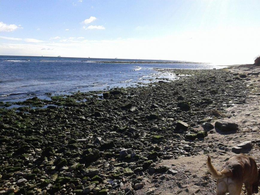 66eeefb7734f4b562b7289862de47986 Грандиозный морской отлив под Одессой впечатляет своими масштабами