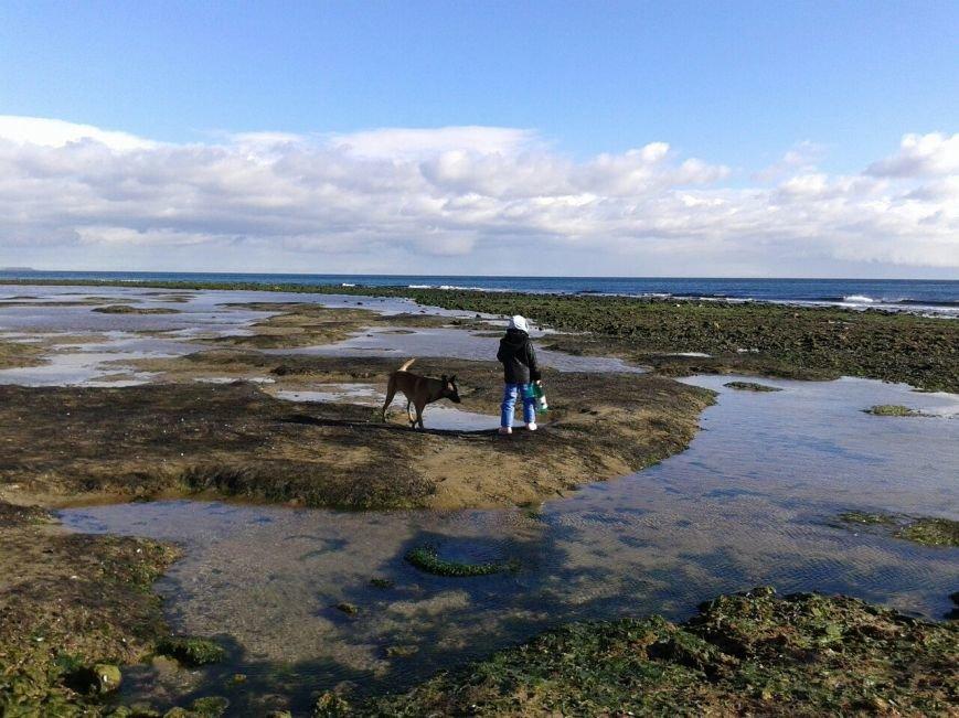 cd4f2d3f62325b5703d6d2a900228165 Грандиозный морской отлив под Одессой впечатляет своими масштабами