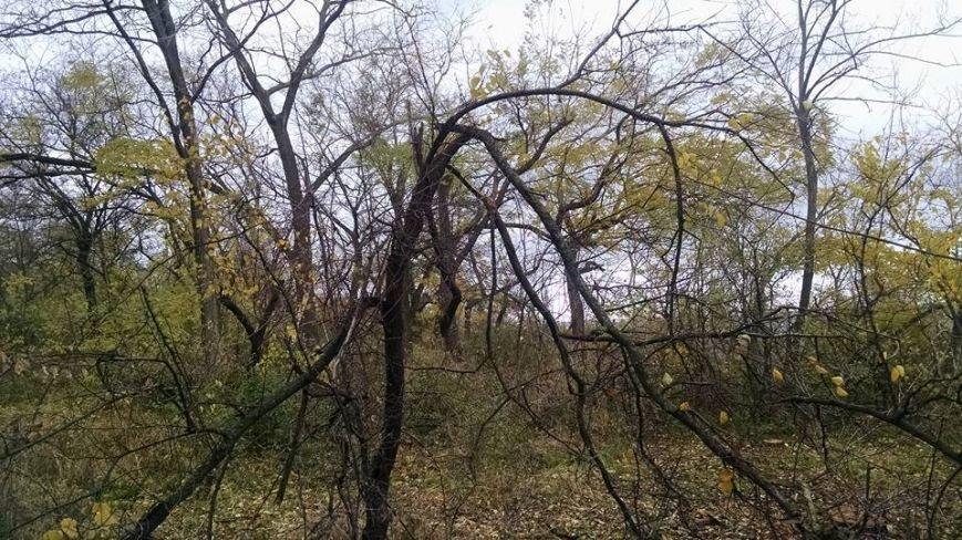 eaf502e63fd645e765e691ad6d48b593 У «Горзелентраста» осенняя депрессия?: на Одесской Трассе Здоровья не разобраны завалы