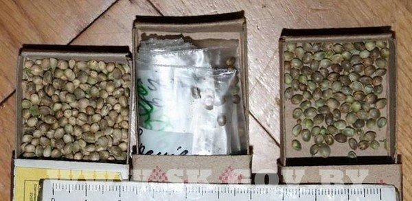 Под Гродно житель выращивал коноплю и готовил из нее марихуану (фото) - фото 3