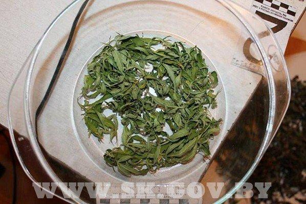 Под Гродно житель выращивал коноплю и готовил из нее марихуану (фото) - фото 4