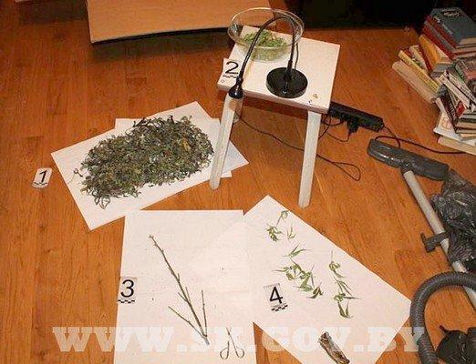 Под Гродно житель выращивал коноплю и готовил из нее марихуану (фото) - фото 2
