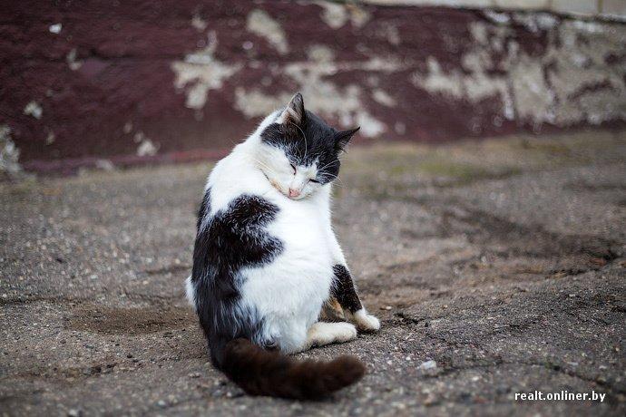 Несмотря на бурное строительство жилья возле Островецкой АЭС девушка-инвалид полжизни ждет социальную квартиру (фото) - фото 28