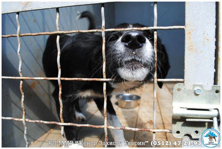 «Не покупай!»: в Николаеве пройдет выставка бездомных животных (фото) - фото 1