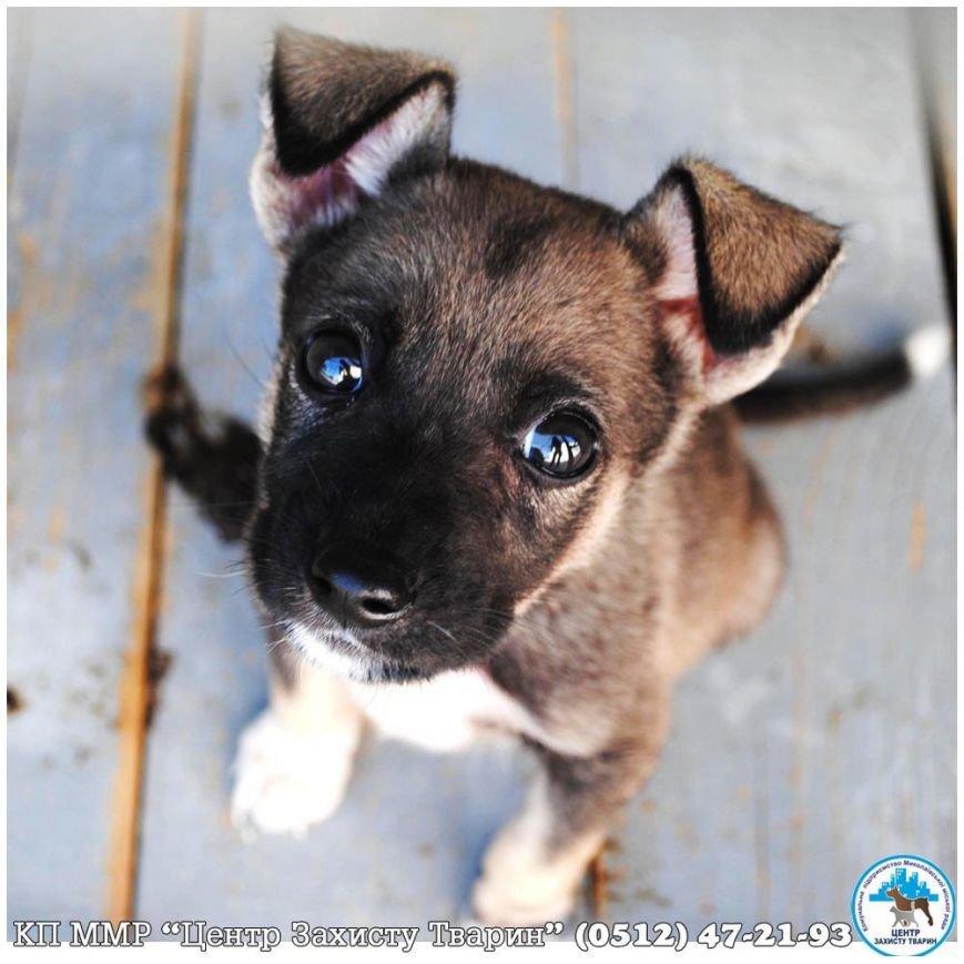 «Не покупай!»: в Николаеве пройдет выставка бездомных животных (фото) - фото 2