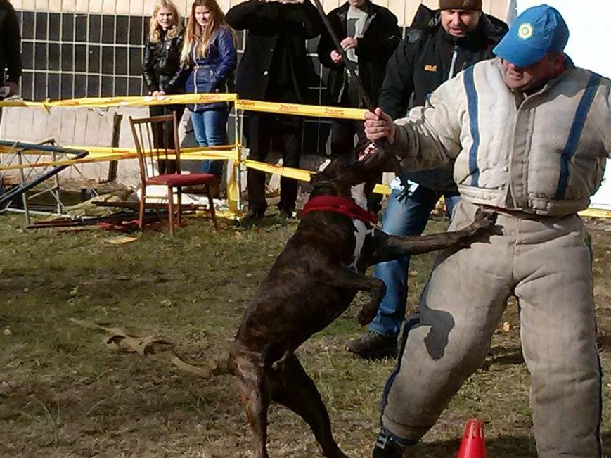В центре Мариуполя собака спасала хозяина от двух вооруженных преступников (ФОТОФАКТ) (фото) - фото 4